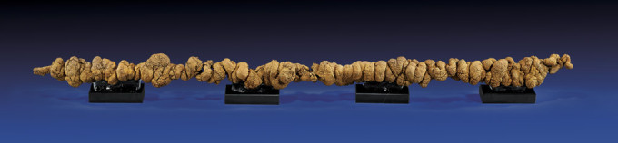 151962lg1 680x158 Man kann die längste versteinerte Dinsaurier Kacke kaufen, die man bisher fand