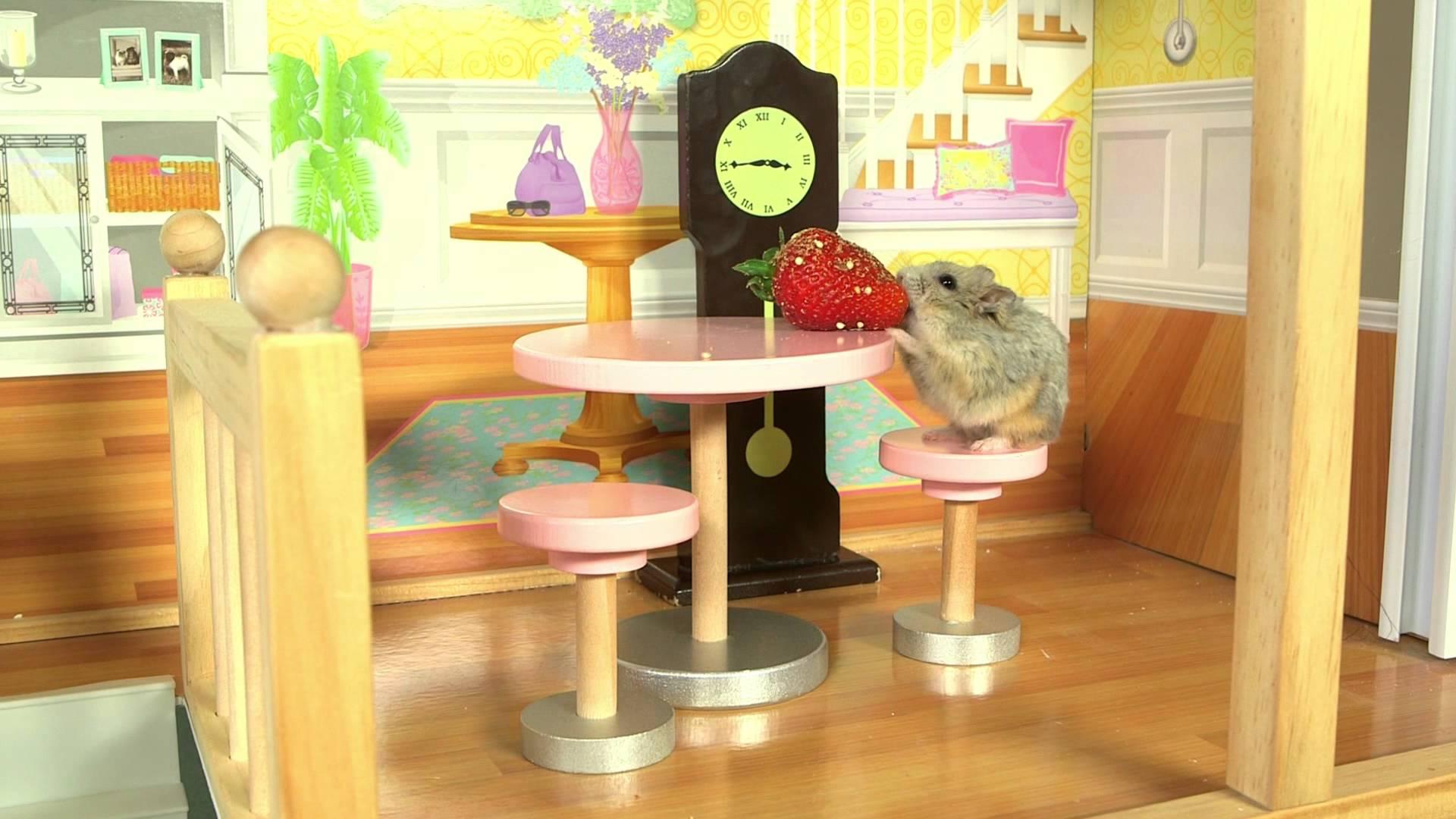 maxresdefault117 Ein kleiner Hamster in einem kleinen Haus