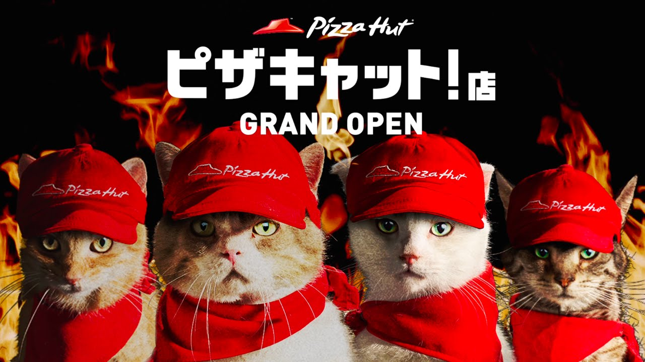maxresdefault63 Samurai Pizza Cat! In Japan arbeiten jetzt Katzen bei Pizza Hut