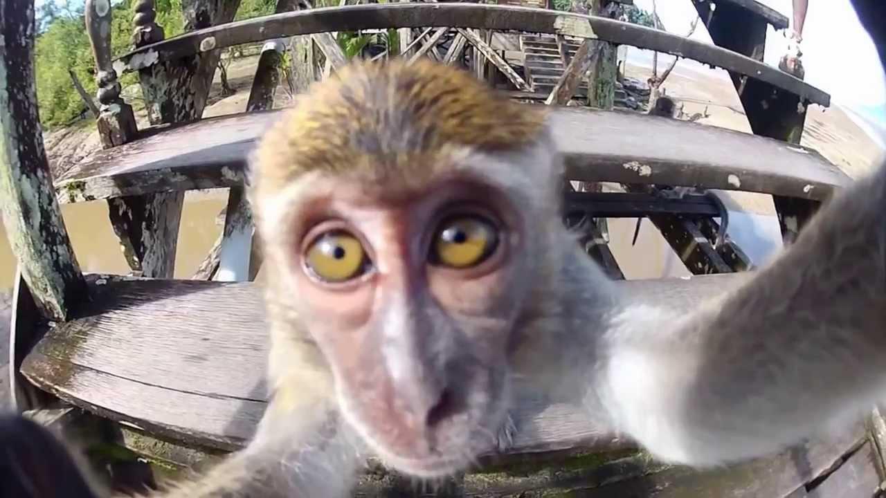 maxresdefaultAVOF47CW  The Best GoPro Animal Videos of 2014... bis jetzt!