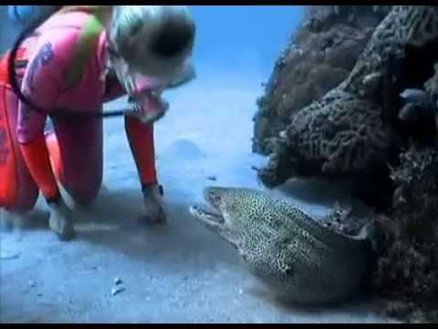 07 Taucherin freundet sich über Jahre mit einem Aal an