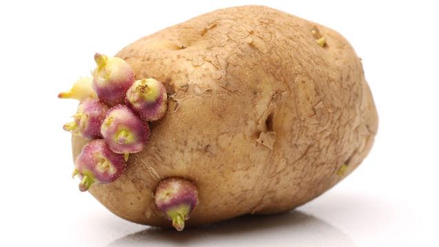 Kartoffeln sind keine Empfängnisverghütung, können sich aber einsam fühlen