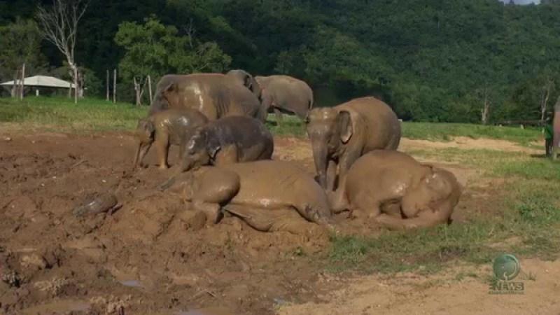 maxresdefault0H6TWN9Q e1414701255376 Im Matsch spielende Elefanten sind glückliche Elefanten
