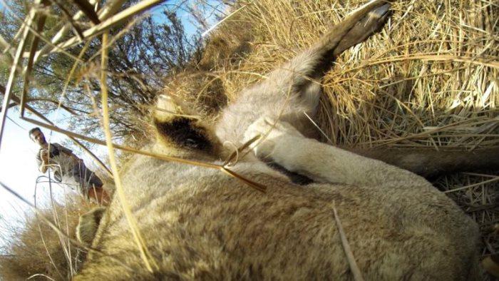 maxresdefault120 e1414601682200 Mit der GoPro auf dem Rücken einer Löwin durch die Savanne