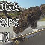 Die Katze Didga hat viel bessere Moves auf dem Skateboard drauf, als du