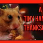 Kleine Hamster essen ein kleines Thanksgiving Dinner
