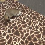Amir, der kleine Wüstenfuchs, fängt Seifenblasen auf einer Giraffendecke