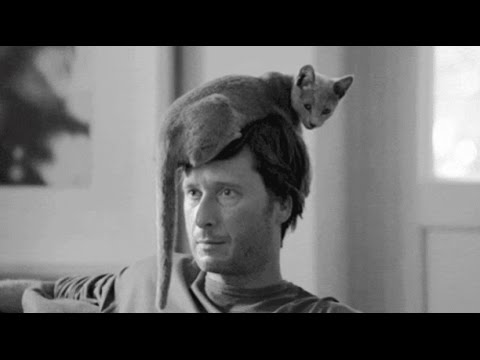 A Musical Tribute to Cats