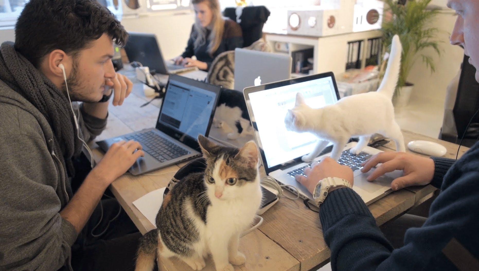 Ein Tag in den Büros von PoopyCat, einer Firma die biologisch abbaubare Katzenklos produziert