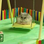 Ein kleiner Hamster auf einem kleinen Spielplatz