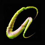 """""""Feelers"""" ist eine animierte Schriftart, die auch gut aus Parasiten bestehen könnte"""