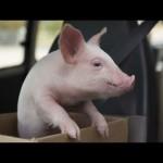 Werbung mit niedlichen Schweinchen funktioniert bei mir leider viel zu gut