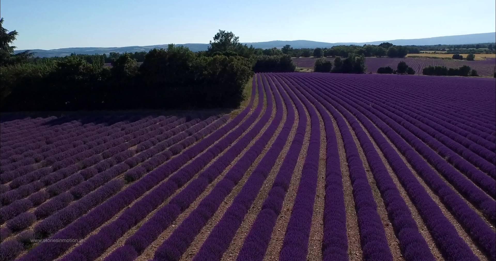 In 4K über die Lavendelfelder der Provence