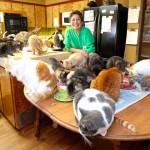 Eine gar nicht so crazy Cat Lady lebt mit 1'100 Katzen