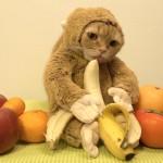 Eine Katze im Affenkostüm leckt an einer Banane (SFW – Das ist kein Porn! Wirklich nicht!)