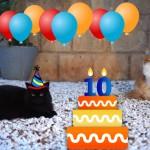 10-Jahre-Gilly-Blog-772x515[1]