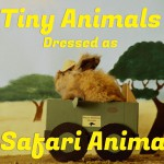 """Tiny Animals Dressed as Safari Animals"""