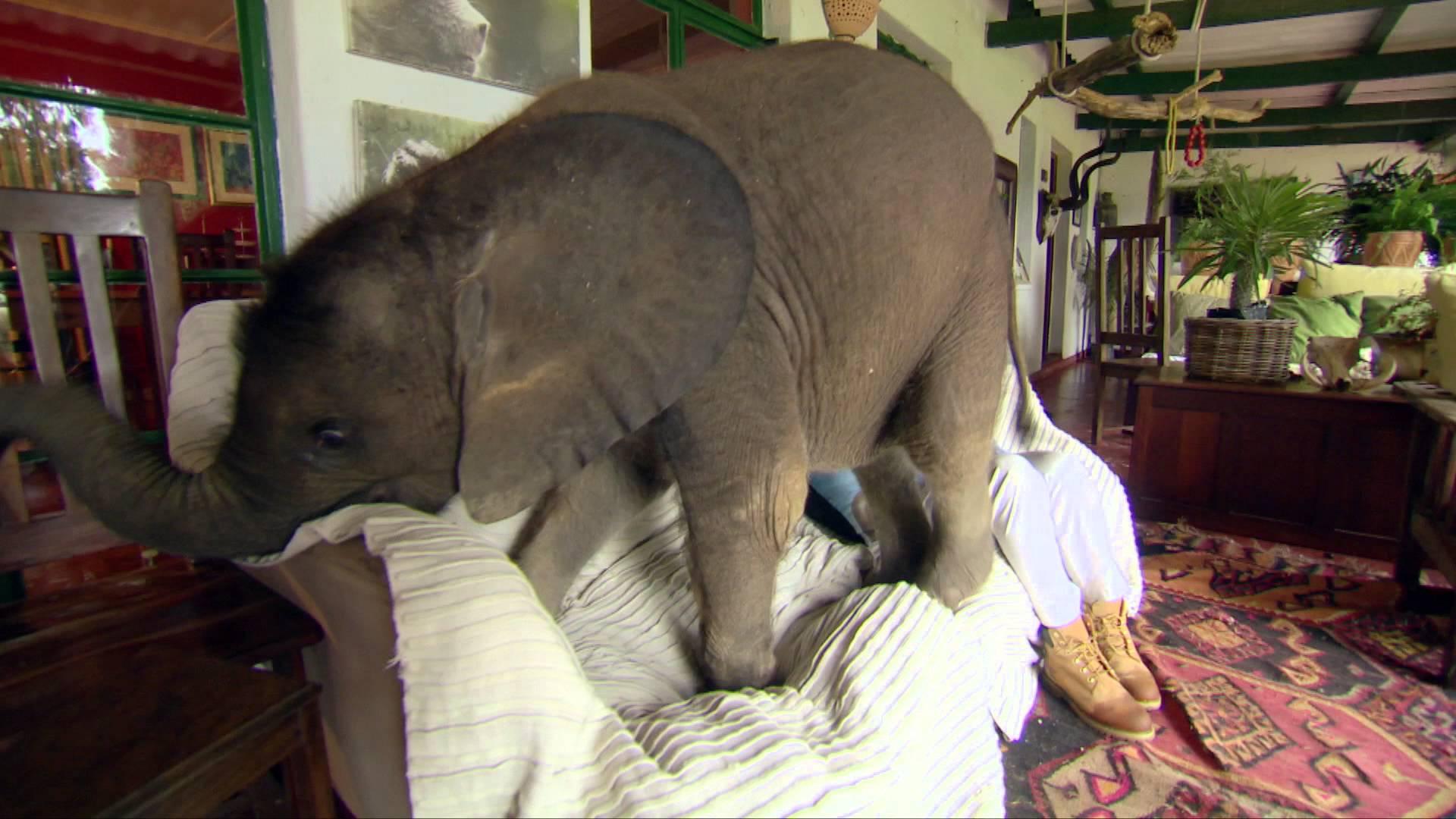 Wer hätte das Gedacht: Babyelefanten sind keine guten Haustiere