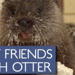 In Finnland schaffte es jemand, sich mit einem Otter anzufreunden