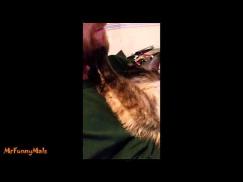 Katzen mögen Bärte?