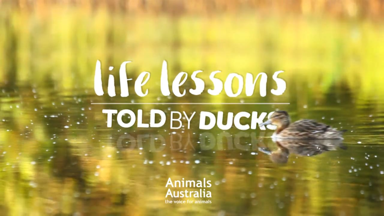 """""""Life lessons – told by ducks"""""""