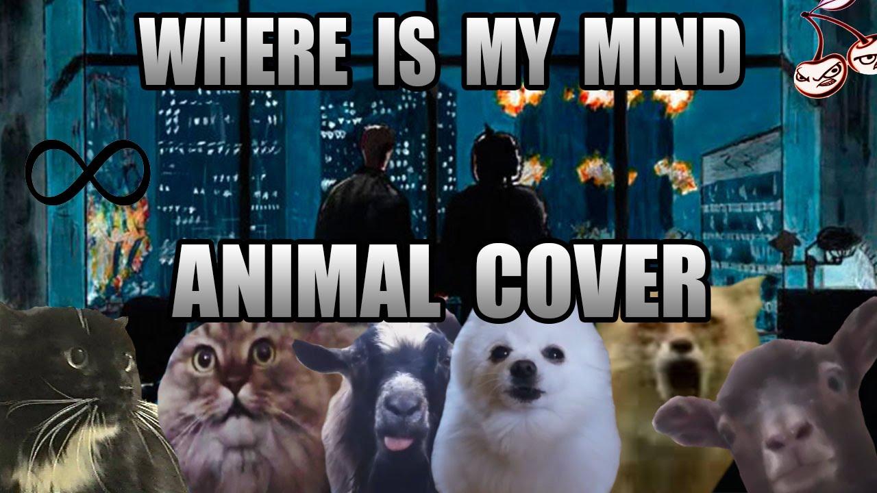 """Viele lustige Tiere performen """"Where Is My Mind"""" von den Pixies"""