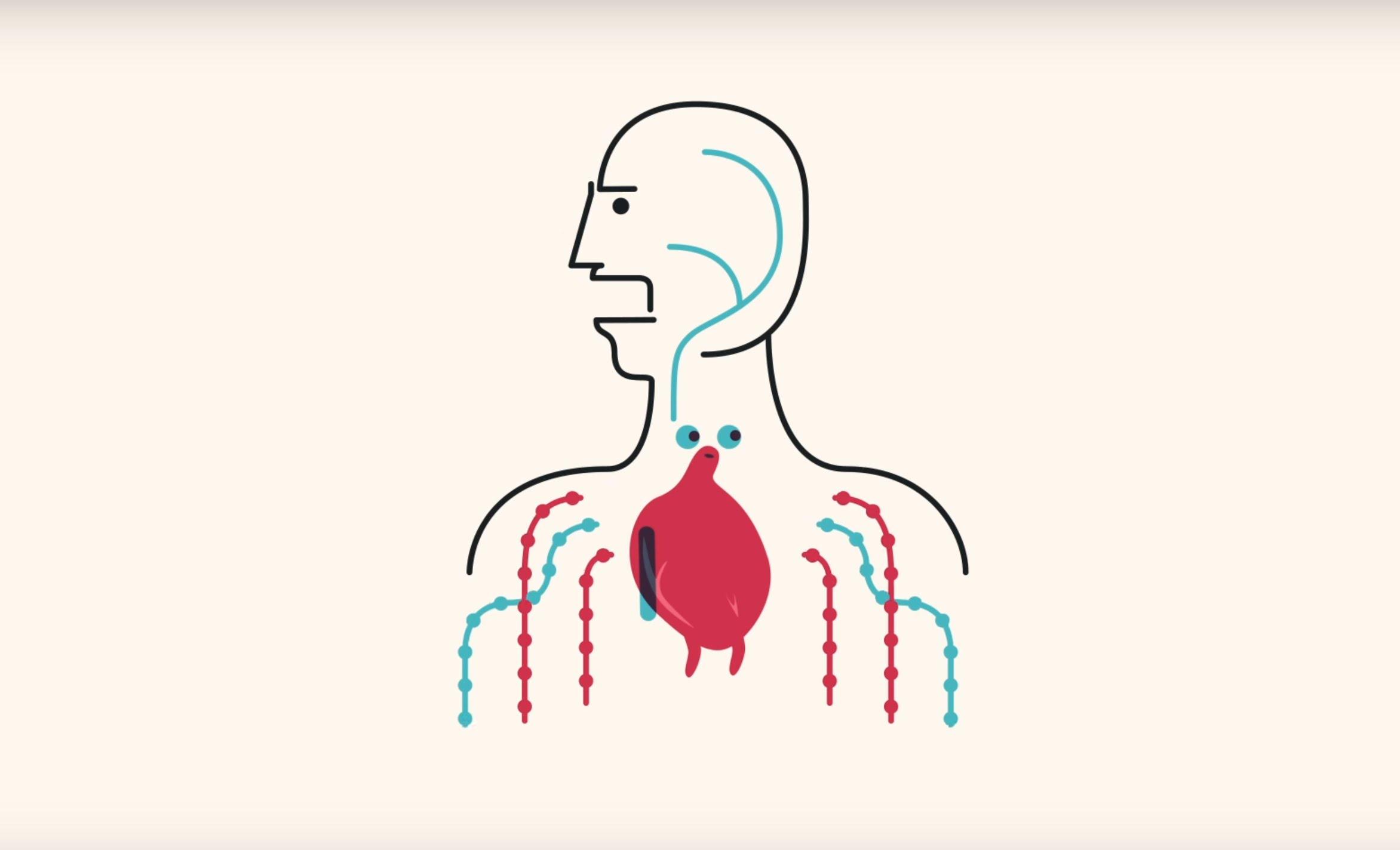 Was passiert eigentlich mit dem Körper in der Schwerelosigkeit?