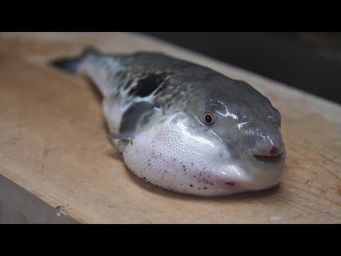 Wie ein japanischer Chefkoch Fugu zubereitet