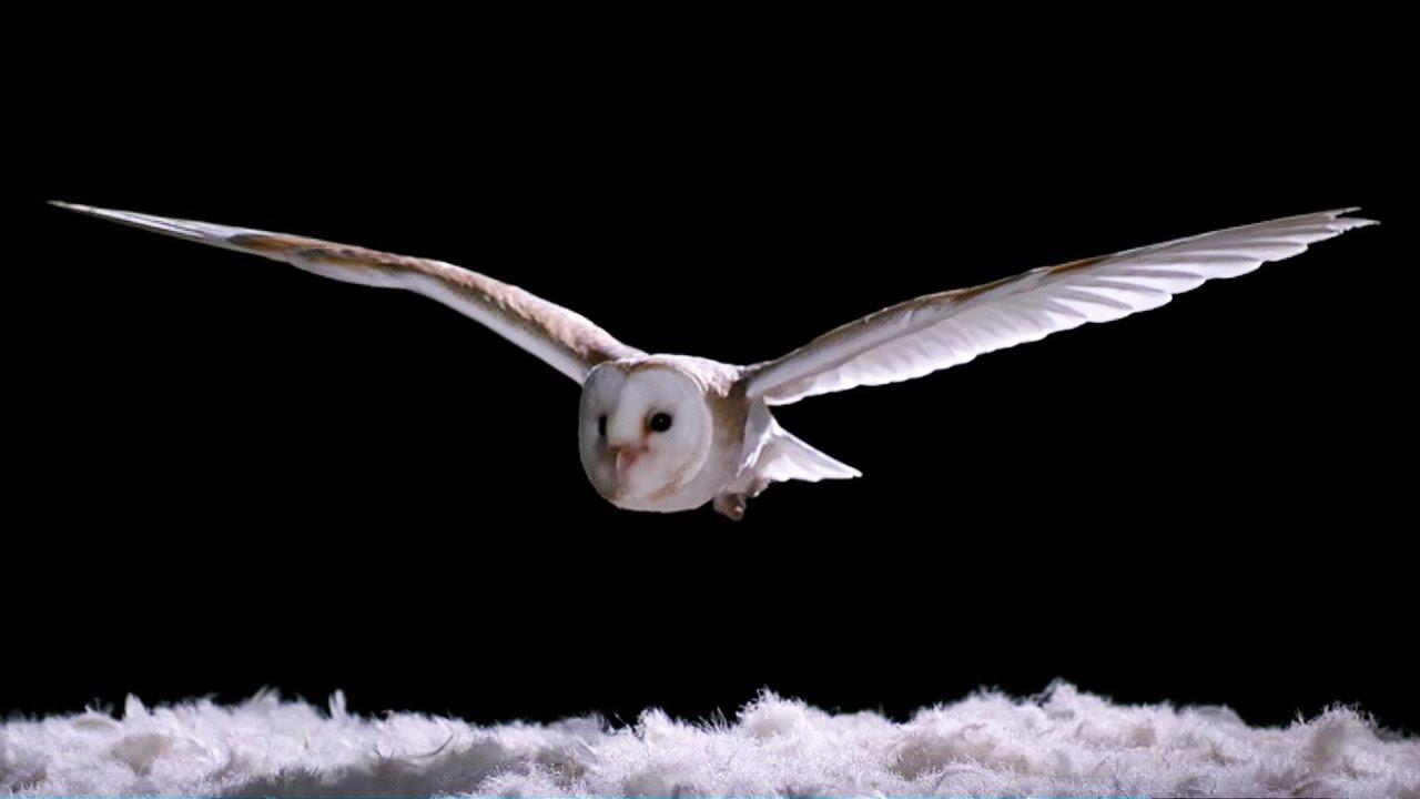Warum fliegen Eulen eigentlich so leise? Die BBC weiß Antwort…