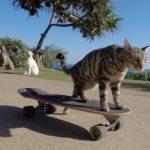 Boomer, die kleine Skateboard-Katze, hat gelernt sich selbst anzustoßen