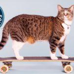 Didga, die Skateboardkatze, ist nun sogar Weltrekordhalter!