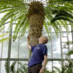 Die Geschichte des einsamsten Baumes der Welt