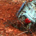 Eine Schar Bulldoggenameisen greift einen kleinen Spielzeugroboter an