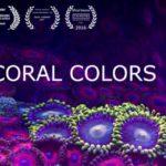 Korallen im Zeitraffer und Großaufnahme