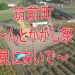 Strawzilla: In Japan haben sie einen 7m-großen Godzilla aus Stroh gebaut!