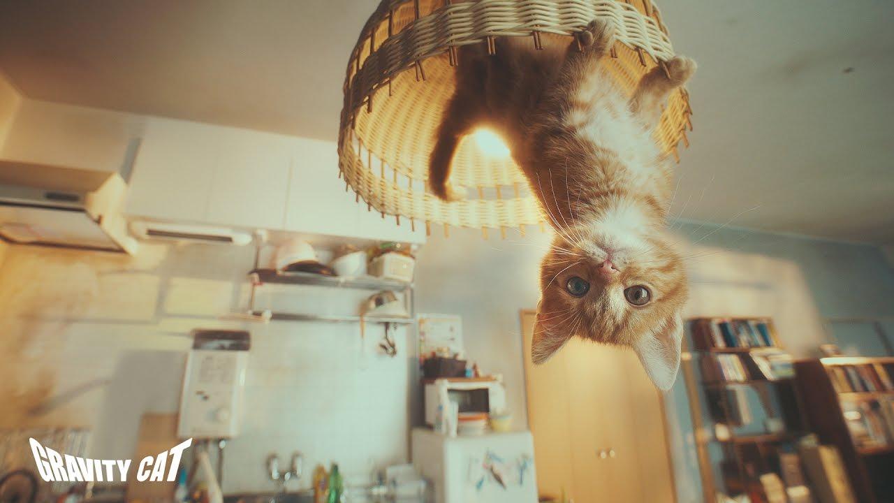 """""""Gravity Cat"""" bewirbt als Kurzfilm ein Spiel mit einer Gravitation verändernden Katze…?"""
