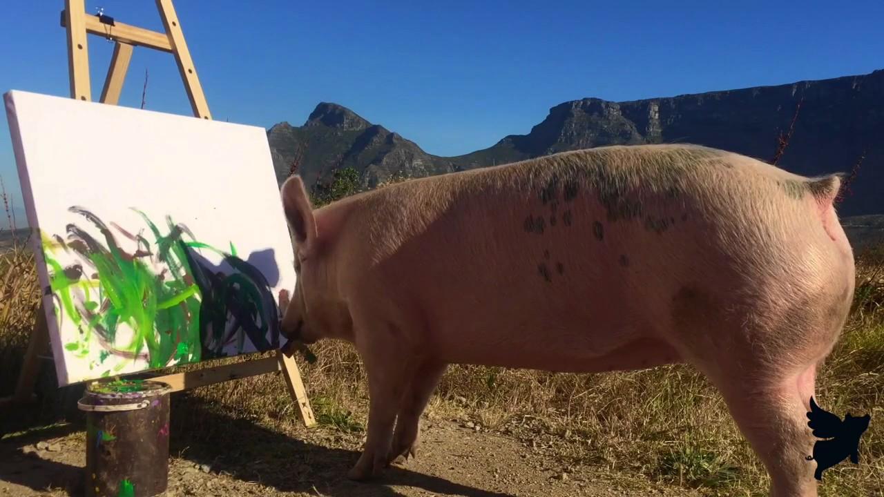 Pigcasso, das malende Schweinchen aus Südafrika