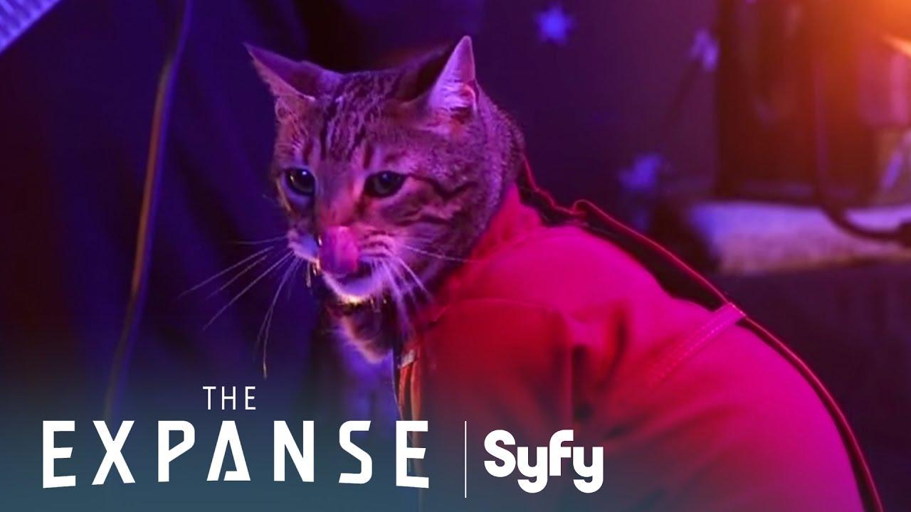"""Wie die erste Staffel von """"The Expanse"""", aber mit Katzen und hinter den Kulissen!"""