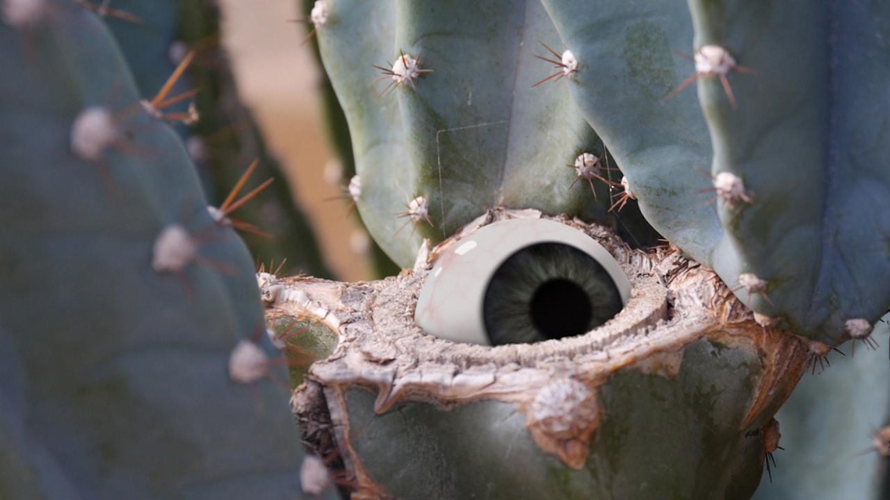 """""""De levende Cactus"""" zeigt uns, dass wir unsere Katkeen ganz falsch erzogen haben"""