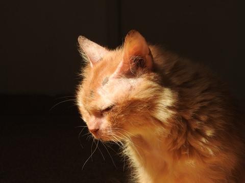 Wie die 17-jährige, verwaiste Katze Cinnamon wieder, lernte Menschen zu vertrauen