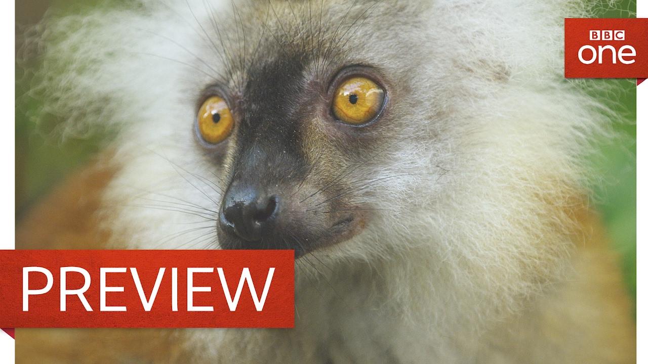 Nature you so wonderful: Lemuren berauschen sich am Gift von Tausendfüßlern