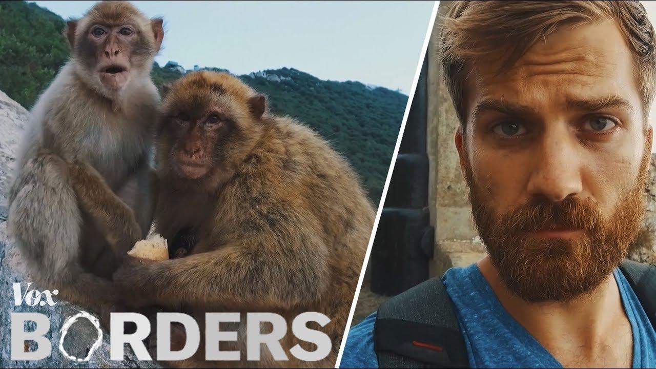 Die einzigen wilden Affen leben übirgens in Gibraltar