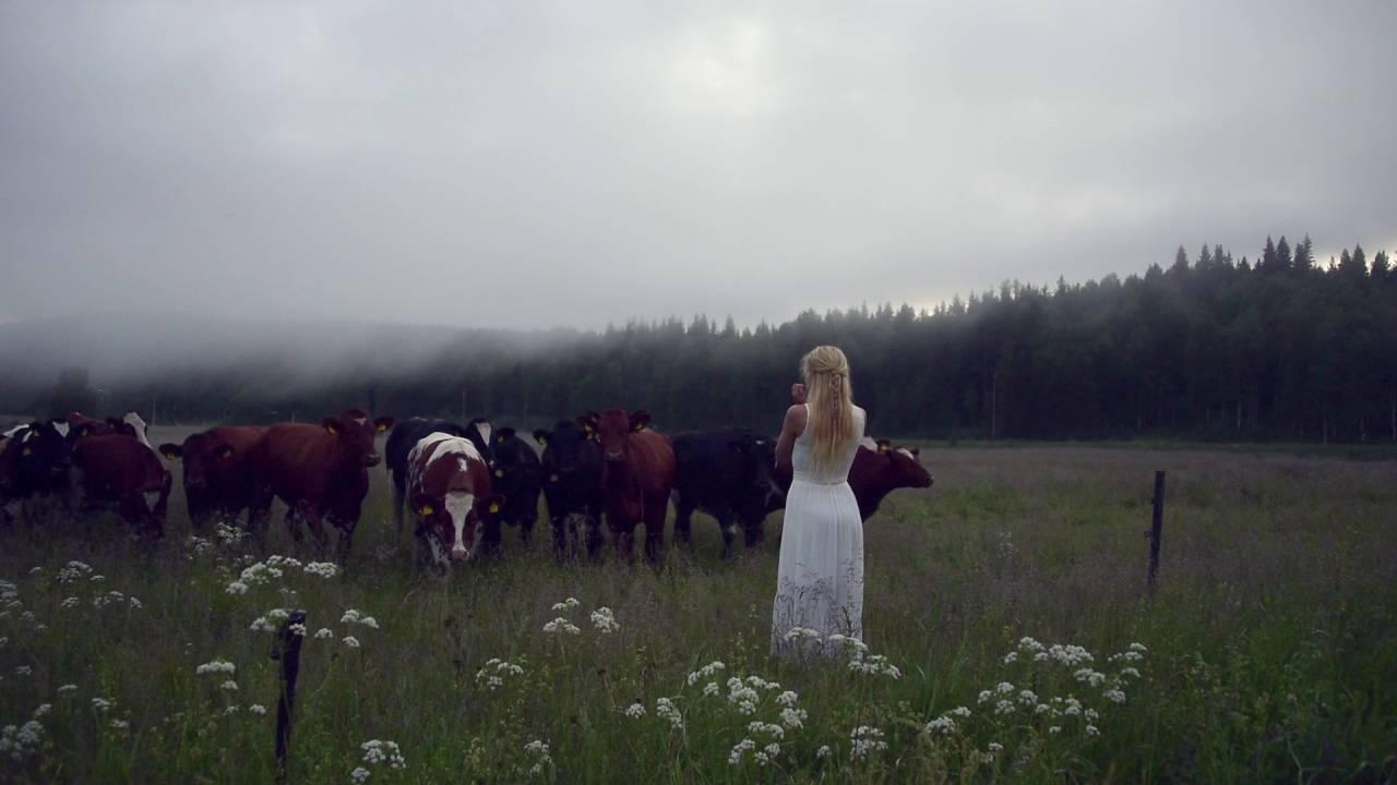 Kulning ist die alte schwedische Kunst, mittels Gesang Kühe zu hüten