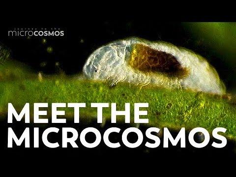 """""""Journey to the Microcosmos"""" ist eine Youtube-Serie über mikroskopisches Leben"""