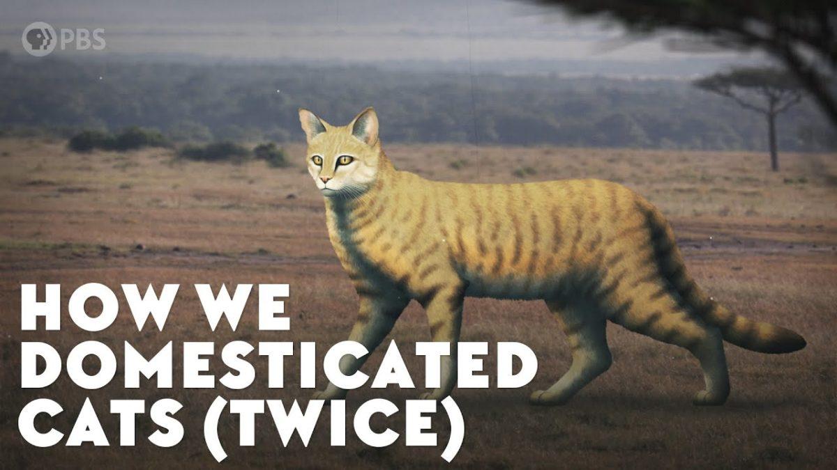 Wie die Menschheit zwei mal Katzen domestiziert hat