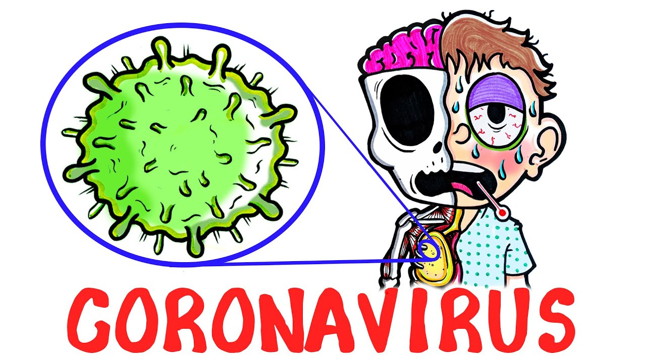Was passiert eigentlich genau in einem vom Corona-Virus befallenen Körper?