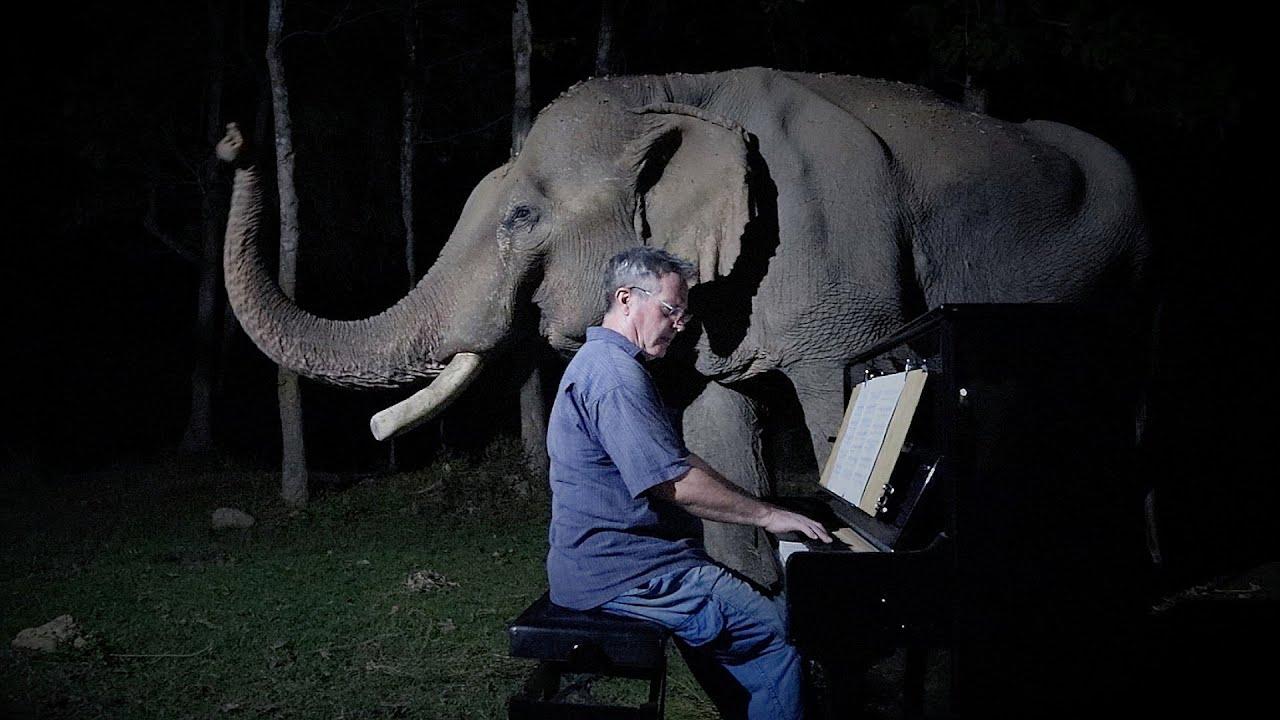 """Die """"Mondscheinsonate"""" von Beethoven, Ludwig van, für den alten Elefanten Mongkol"""