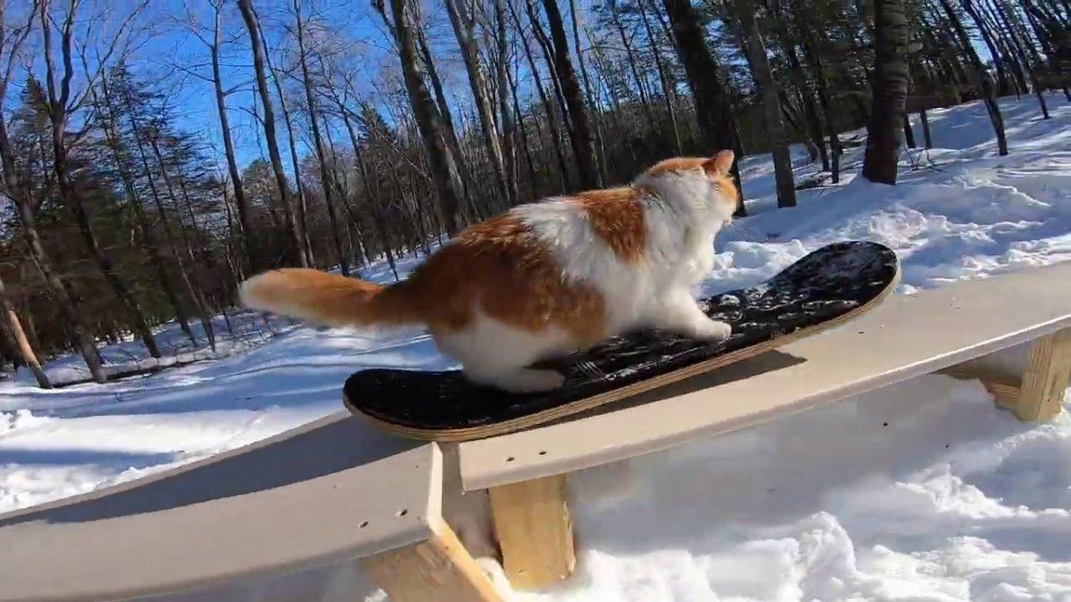 Taddy die Katze und ihre famosen Snowboard-Skills