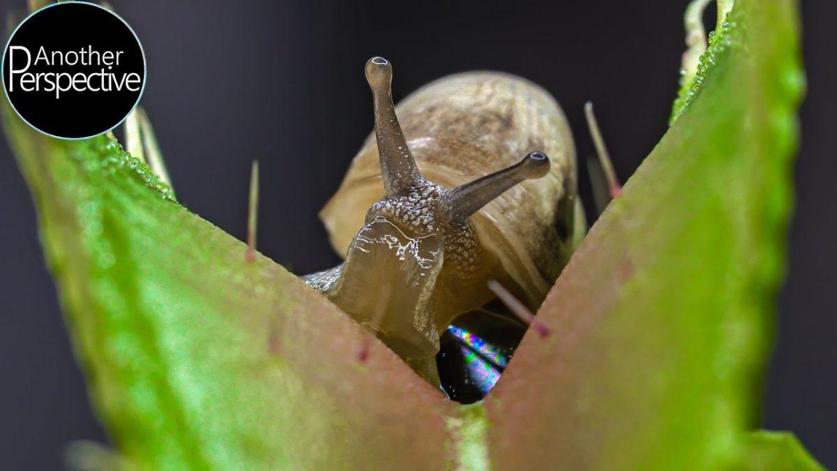 Wunderschöne Macro-Aufnahmen von Käfern in fleischfressenden Pflanzen