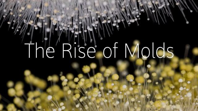 """""""Rise of the Molds"""" – Schimmel unter der Macro-Linse im Zeitraffer"""